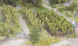 Heki 19136 wijnstokken